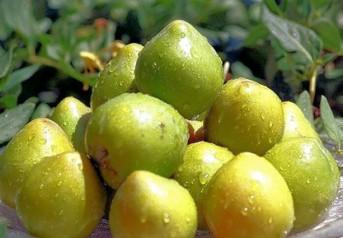Kakadu Plum helps make Pellelucent the best anti wrinkle cream and the best anti aging cream